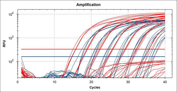 qPCR amplification plot