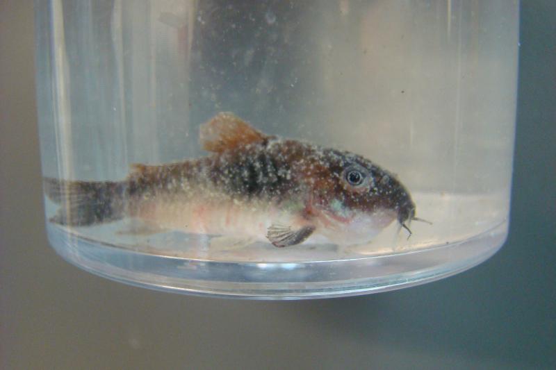 Ornamental Fish Roger Williams University