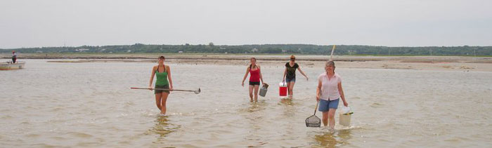 ADL field sampling for clams