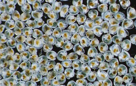 ... ; Luther H. Blount Shellfish Hatchery; Oyster Gardening; Wet Lab