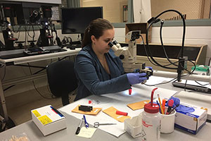 Student working in the Rhode Island Crime Lab.