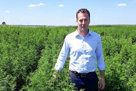 Adam Maust stands in the first field of artemesia grown by the University of Kentucky.